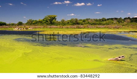 Lime green algae floating in forest pond - stock photo