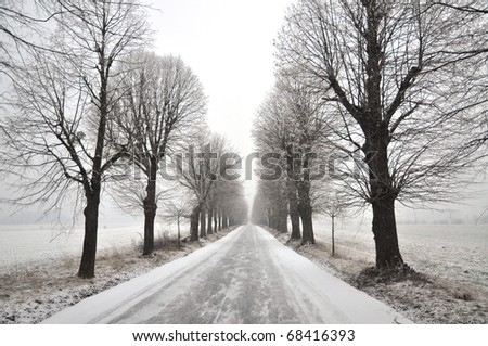 Lime tree avenue in winter. Pivola, Slovenia