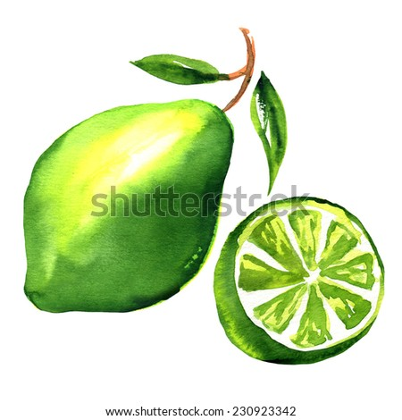 Limes with slices and leaves isolated - stock photo