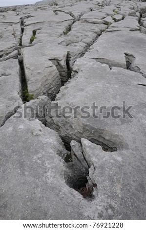 Limestone Pavement Grykes, Black Head, The Burren