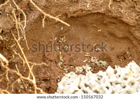 Limited termites destroy wood houses in both peach and dangerous underground nest. - stock photo