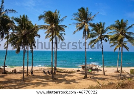 Line of coconut trees along a sandy beach against blue skies in Myanmar west coast. - stock photo