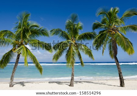 Line of three coconut palm trees at Titikaveka beach in Rarotonga Cook Islands during sunset. - stock photo