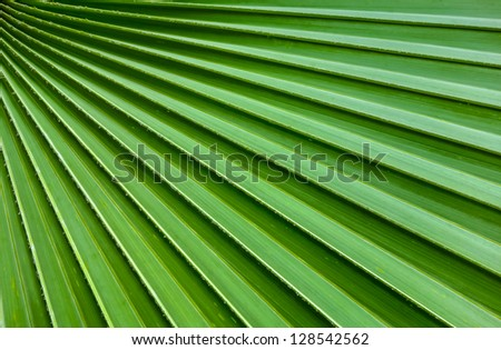 Lines abstract image of Green Palm leaves - stock photo