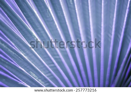 Lines and textures of  Palm leaves - stock photo