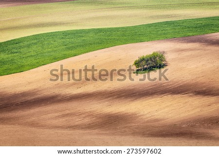 Lines and waves with trees in the spring, South Moravia, Czech Republic - stock photo