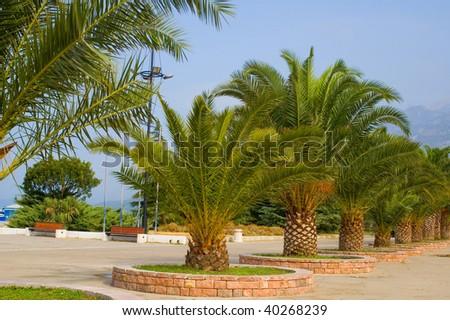 Lines of palm trees along seashore - stock photo