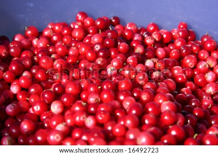 lingonberry - stock photo