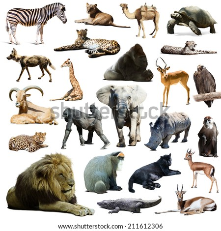 lion  and other African animals. Isolated over white background  with shade - stock photo