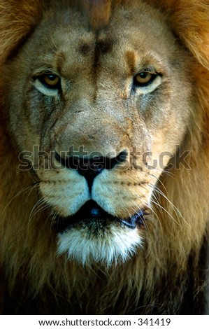 Lion headshot - stock photo