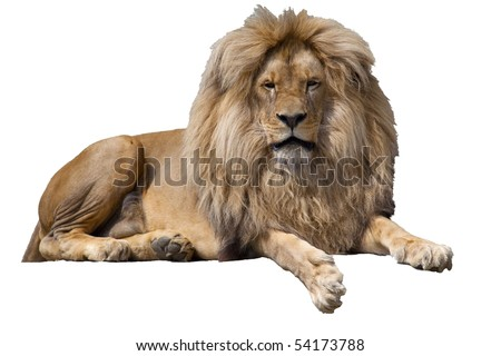 lion isolated - stock photo