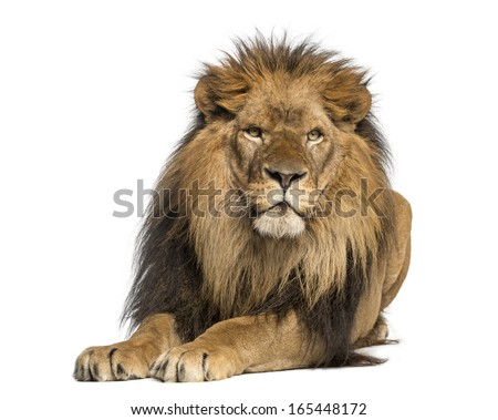 Lion lying down, facing, Panthera Leo, 10 years old, isolated on white - stock photo