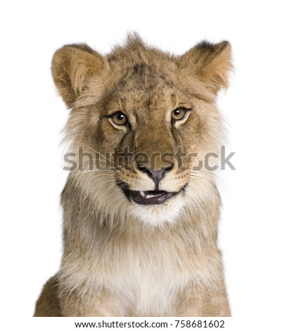 Lion, Panthera leo, 9 months old, in front of a white background, studio shot