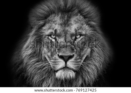 Lion portrait black white black background stock photo image royalty free 769127425 shutterstock