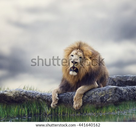 Lion Resting on a Rock - stock photo