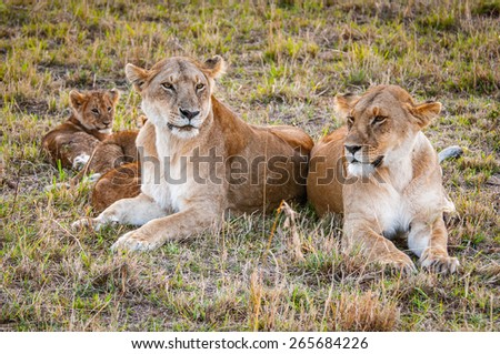 Lioness and her little lion cubs - stock photo