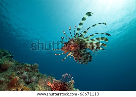 lionfish and ocean. - stock photo