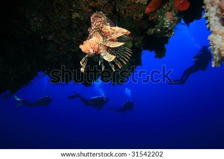 Lionfish and Scuba Divers - stock photo