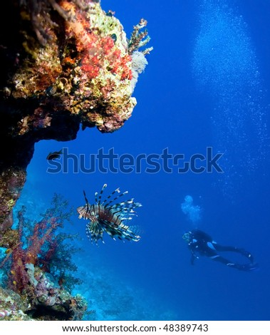 Lionfish and Woman Scuba Divers near Coral Reef - stock photo