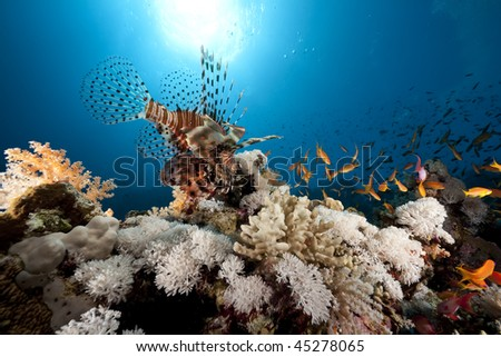 lionfish, coral and ocean - stock photo
