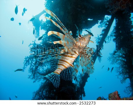 lionfish near a wreck - stock photo