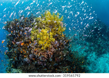 """Lionfish on the wreck """"Lighthouse"""" near the city Dahab in Egypt - stock photo"""