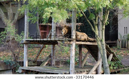 Lions at london zoo - stock photo
