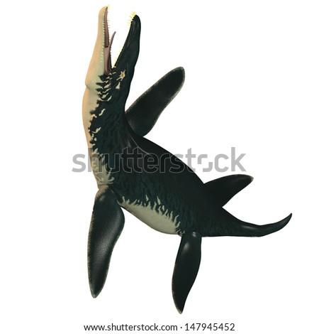 Liopleurodon on White - Liopleurodon was a large carnivorous marine reptile in the Jurassic epoch. - stock photo