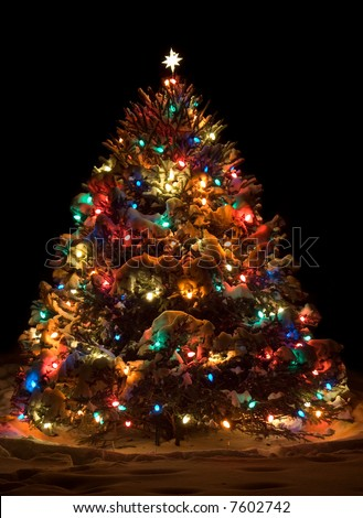 Lit up outside christmas tree - stock photo