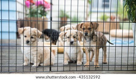 Litter of Foster Puppies Playing in Secure Area Outside on Wooden Deck - stock photo