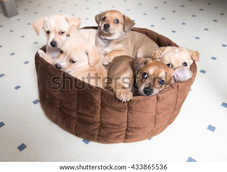 Litter of Terrier Mix Puppies Sleeping in Brown Bed - stock photo