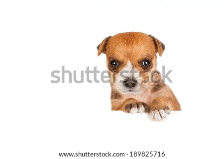Little adorable puppy - stock photo