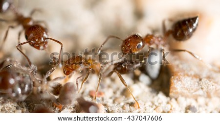 little ant in nature. super macro - stock photo