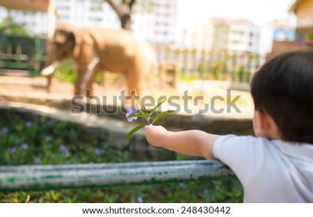 Little asian boy feeding a elephant at the zoo at the day time. Focus on hand. - stock photo