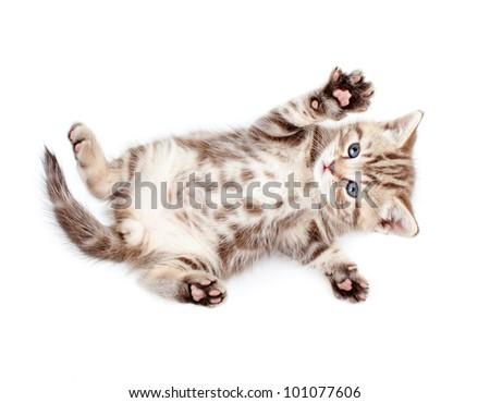 Little baby kitten lying on back - stock photo