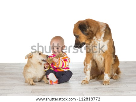 Little baby sitting on the floor flanked by the two family pets feeding one dog a chewy bone watched enviously by another - stock photo