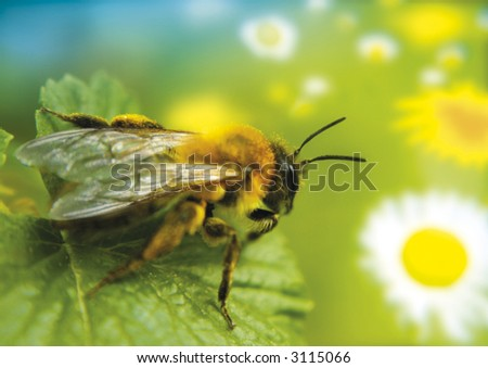 little bee watches a flower-paradise - stock photo