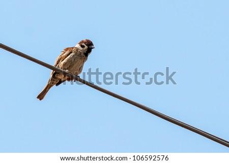 little bird on the wire - stock photo