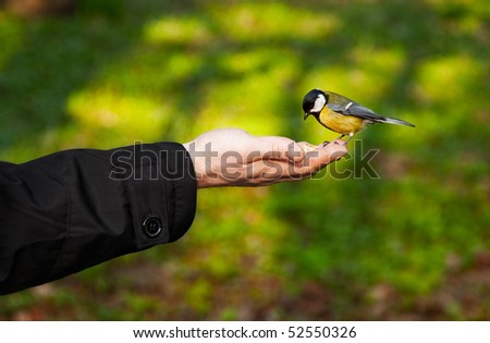 little bird sitting on hand - stock photo
