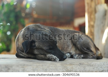 Little black puppy sleeping and dreaming - stock photo