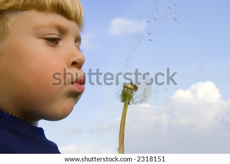 Little boy blows on a seedy pod plant as seeds drift off - stock photo