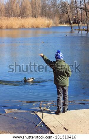 Little boy feeding ducks at the edge of the pond - stock photo