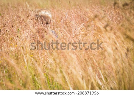 Little boy in a field of tall grass. Kid playing, running in nature. A child plays, field, grass, happiness, childhood. - The idea of a carefree childhood. Article about children games. - stock photo