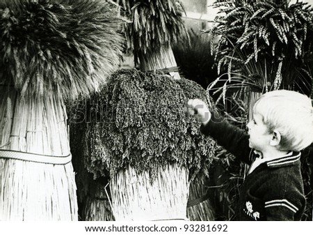 little boy is considering sheaves of cereal crops in the agricultural exhibition, Kursk, USSR, 1984 (very grainy image)
