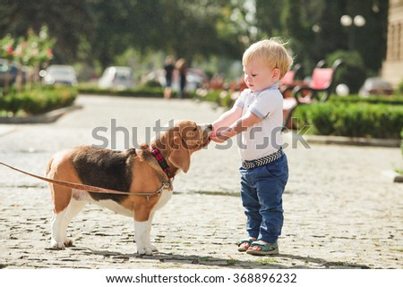 Little boy is feeding the beagle dog in the walking