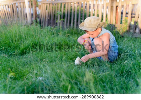 Little boy playing with a fluffy yellow baby chick at the farm crouching down in the green grass to feed it - stock photo