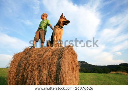 Little boy playing with the dog (Alsatian) on the meadow - summer in the country during summer holidays - stock photo