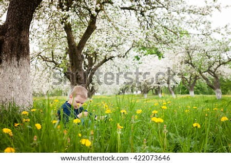 Little boy reading a book under big apple tree