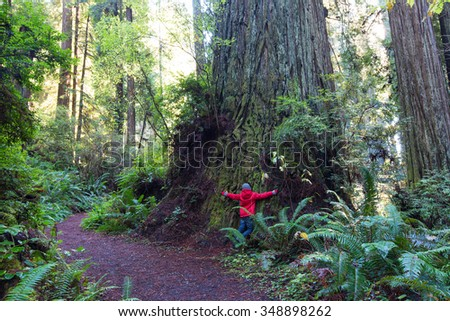little boy touching giant redwood and enjoying hiking in gorgeous redwood national park - stock photo