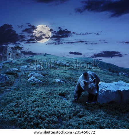 little brown bear walking among white sharp stones near the old castle on the hillside at night in moon light - stock photo
